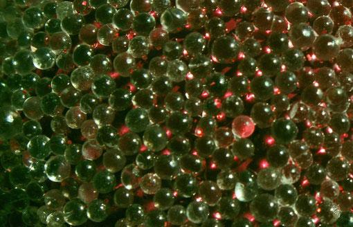 Fantasie & Wirklichkeit Fotografien und Gedichte Kathrin Steiger Perlen rot grün