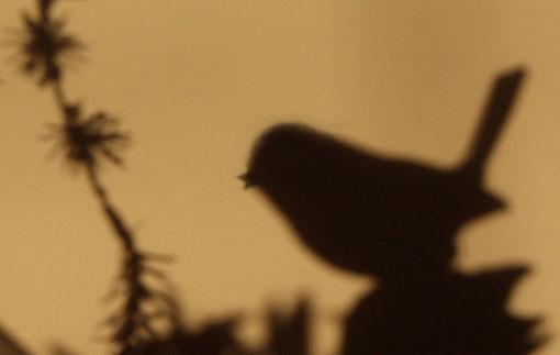 Fantasie & Wirklichkeit Fotografien und Gedichte Kathrin Steiger Vogel Licht und Schatten