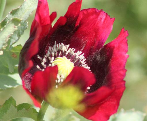 Fantasie und Wirklichkeit Fotografien und Gedichte Kathrin Steiger Blume