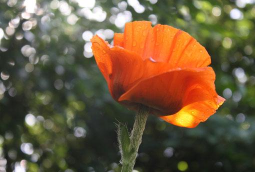 Fantasie und Wirklichkeit Fotografien und Gedichte Kathrin Steiger Blume Licht Wassertropfen Regentropfen glitzer