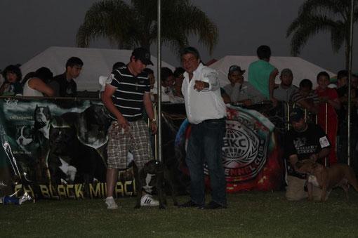 DESARROLLO DEL SHOW en el ULTIMATE BULLY SHOW de GUADALAJARA
