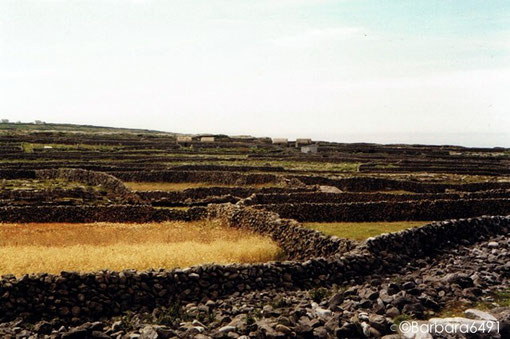 Von Mauern geschützte kleine Felder auf Inishmaan, einer der Aran-Inseln, Co. Clare