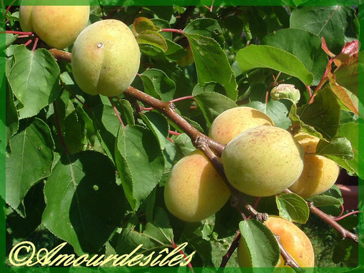Et ses superbes fruits délicieux!