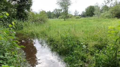 Sommerhochwasser im Malereckried (Foto: NABU Langenargen)