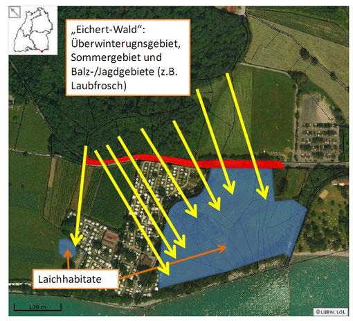 Überwinterungsgebiet Eichert und Laichhabitat Boschach in Kressbronn mit Krötenzaun (Luis Ramos 2013)