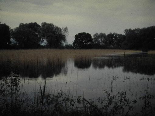 Das Malereckried im Mai 1999 (Foto: NABU Langenargen)