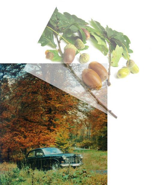 Herbst- Impressionen im Taunus