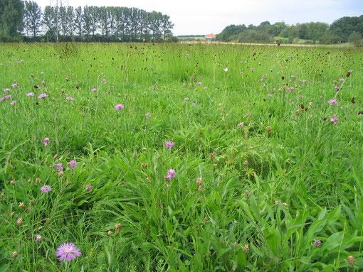Wechselfeuchte Wiesen am Hechtgraben bei Dorheim