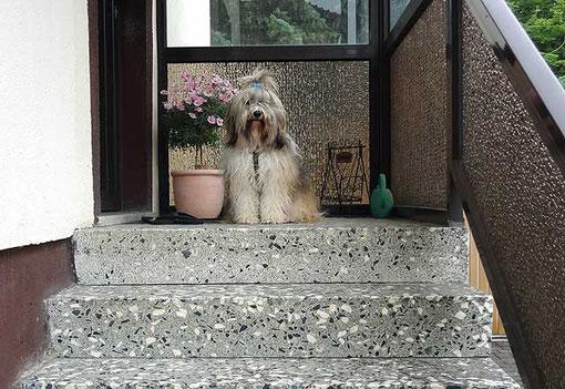 Milka wartet auf Frauchens Kommando