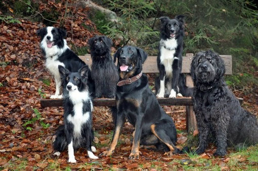 Bill, Peggy,Newt,Eyco,Bo, Leeloo