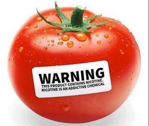 ... kaum zu glauben, dass Nikotin in vielen Lebensmitteln drin ist wie z. B. hier in der Tomate :-)