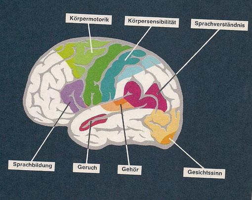 ...das menschliche Gehirn...