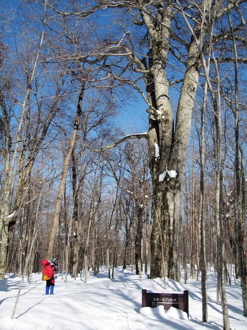 冬の「森の神」