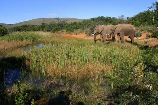 aufgenommen bei der Addo Elephant Back Safari Lodge