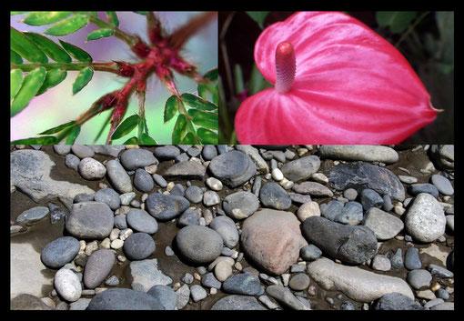 »Humboldt 2.0 - Geografía de las Plantas en los Países Tropicales« / still aus dem Video von Fabiano Kueva · 2012