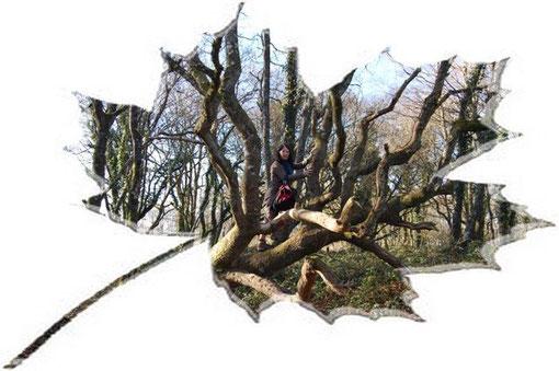 Mado et son  arbre