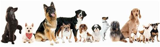 individuele hondentraining, hondencursus, hondenschool, trekken aan de lijn, ontspannen wandelen met de hond, plezier voor je huisdier