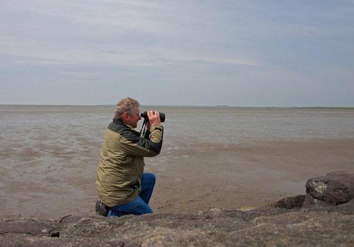 Beobachten am Wattenmeer der Nordsee, Mai 12