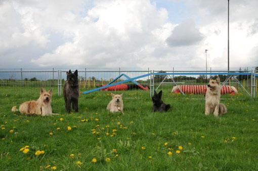 Und zum Agility-Training mit Fernande waren wir auch! Grizzly hat sich gefreut...und auf einmal waren es 5 Picards!