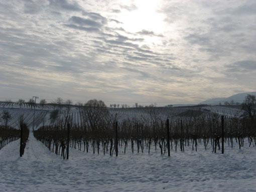 Winter an der Weinstraße