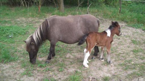 Souris à donner naissance à Luna, le 20 aout 2011! photo à 1 jour