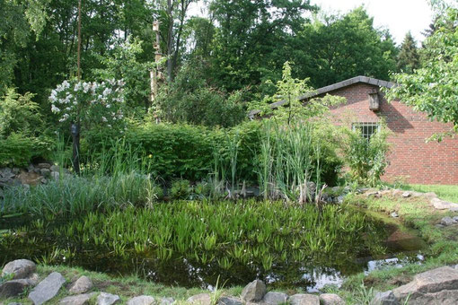 Der Tümpel, ein Kleinstbiotop auf dem Gelände. Im Hintergrund das Vogelhotel mit unterschiedlichen Nistkästen
