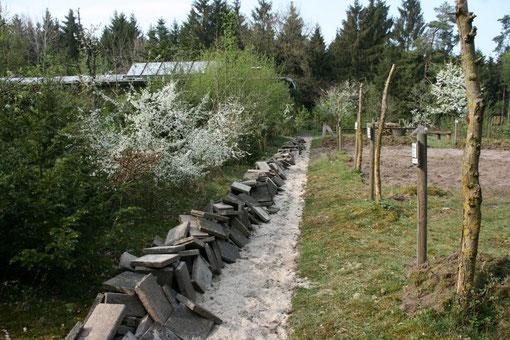 Entsiegelung von Gehwegen. Aus alten Gehwegplatten werden Unterschlupfe für Eidechsen, Amphibien,Insekten u.a. In der Hecke steht der Schlehdornstrauch in voller Blüte. Einheimische Sträucher statt Exoten im Garten ist das Ziel.