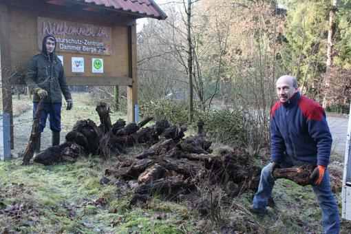 Anlage von Wurzelstubbenhaufen in der Obstwiese des Naturschutzzentrums Dammer Berge als Biotop für die heimischen Eidechsen. Aktive: Zivi Fabian Prissok und Uli Vaske.