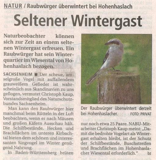 Bietigheimer Zeitung vom 20.12.2007 über Raubwürger - Seltener Wintergast