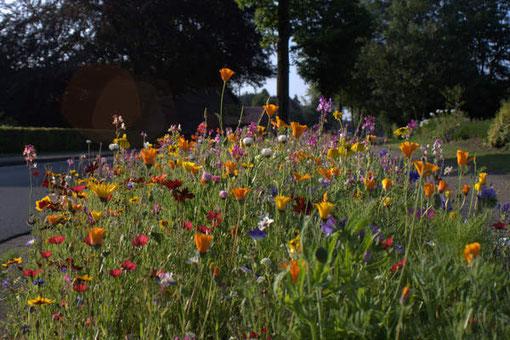 Blühstreifen lassen Bothel und Brockel aufblühen