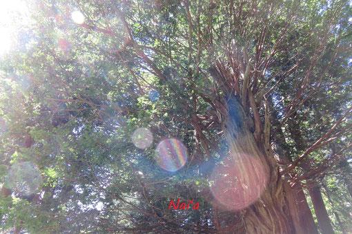 スピリチュアルカウンセリング ヒーリング整体 ユニコーン 木 精霊 木霊