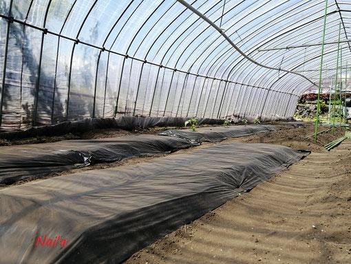 農業 菜園 マルチ張り ハウス栽培 支柱 田舎暮らし