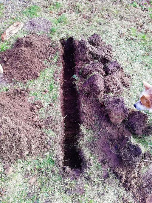 Die 1. Spatenreihe: Links der Unterboden, rechts die Grassoden