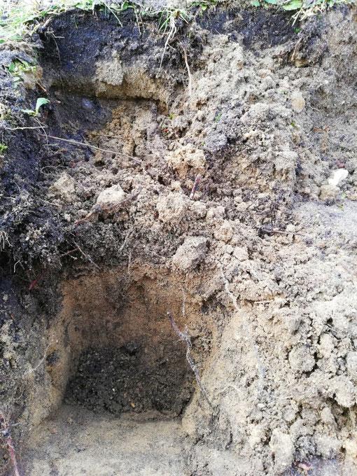 Bodenschichten