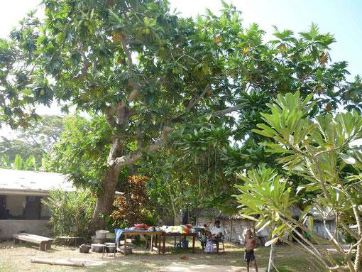 coin cuisine sous l'arbre à pain