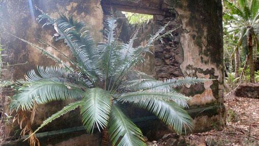 ruines du pénitencier envahits par la végétation