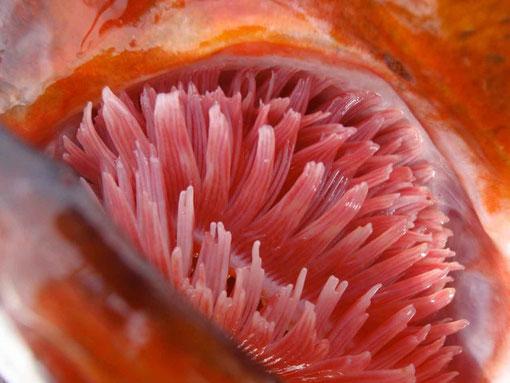 il est pas frais mon poisson ?