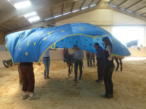 Esel-Workshop Bodenarbeit mit Judith Schmit 21. + 22. Juli 2012