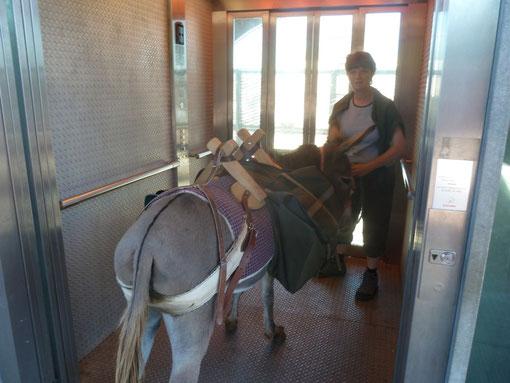Während unserer Wanderung rundum Luxemburg: Moccassine im Lift der Passerelle in Esch-Alzette