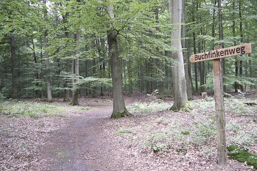 FriedWald Bernau bei Berlin