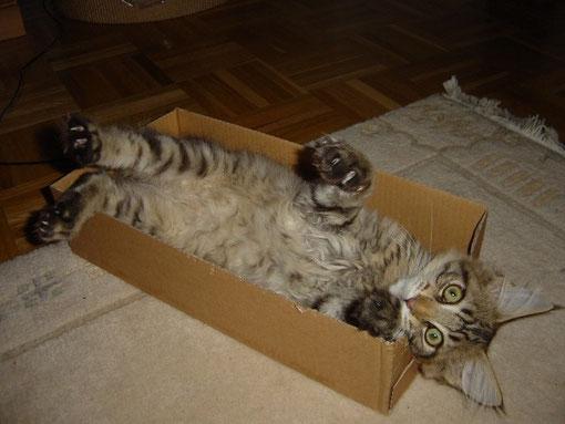 Kartons finde ich super...