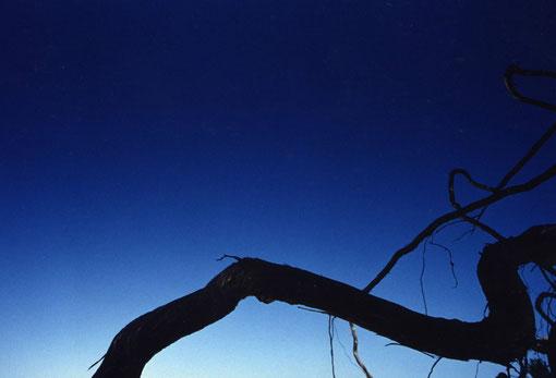 Juniper roots; Spain.