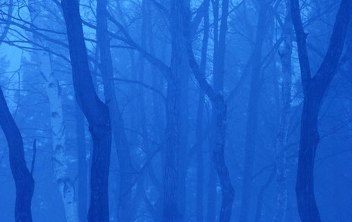"Winter ""satoyama"" mixed forest; Niigata, Japan."