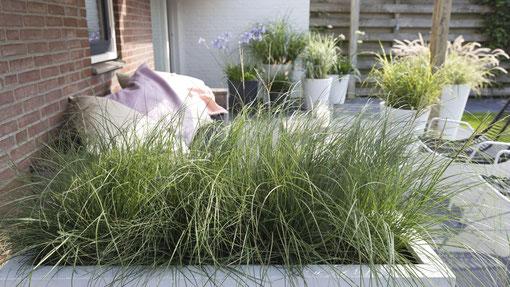 Auch für Balkon und Terrasse geeignet: Gräser bieten vielfältige Gestaltungsmöglichkeiten und machen auch im Winter eine gute Figur. (Bildnachweis: GMH/LV-NRW)