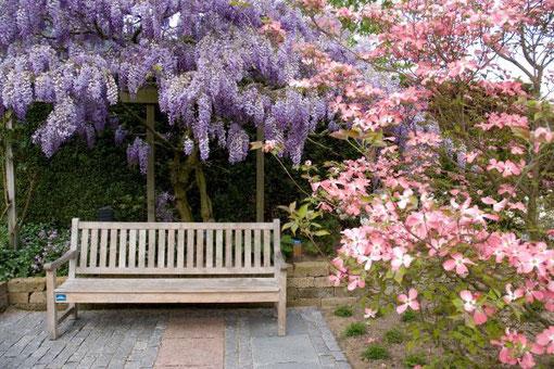 Ein Garten braucht Pflanzen, die in die Höhe wachsen. Mit pflegeleichten Sorten klappt es. Foto: GPP