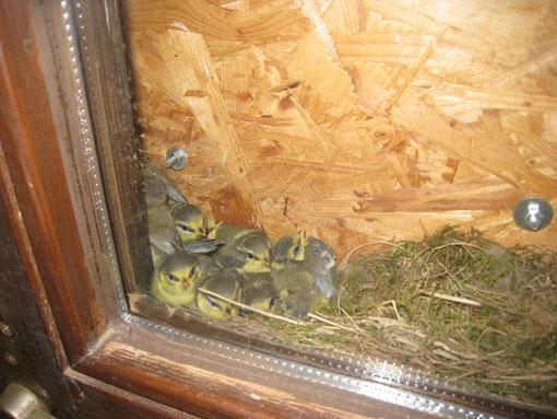 """Vogelnest in der Materialhütte der """"Kleinen Wölfe"""""""