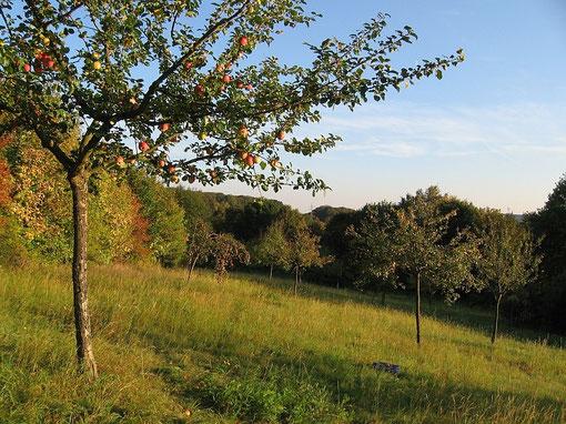 Streuobstwiesen wie diese hier bei Niederseelbach sind schützenswerte Lebensräume. (Foto: J.Streicher)