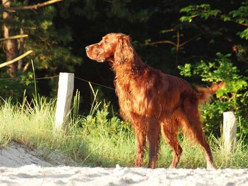 Sommerurlaub auf Usedom