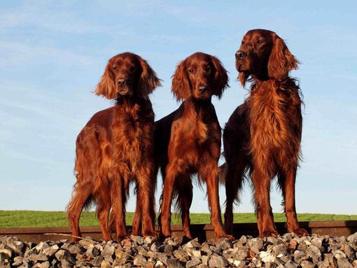 Dairin, Hanny und Phelan