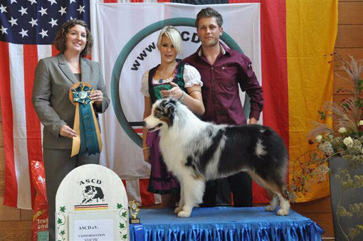 10/2011: RESERVE WINNERS DOG out of BBX under SBJ Leslie Creelman-Sosa
